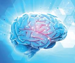 Silne działanie ochronne na układ nerwowy