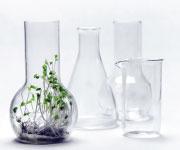 Jak rośliny wytwarzają Sulforafan