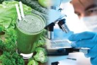 Chemia warzyw krzyżowych