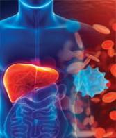 Dihydrokwercetyna chroni przed uszkodzeniami i zapaleniem wątroby