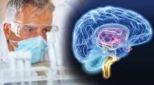 GPC: ważna substancja odżywcza mózgu