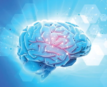 Dihydroquercetin Supports Nervous System Health