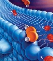 Dihydrokwercetyna hamuje stres oksydacyjny i stany zapalne