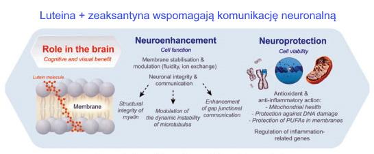Składniki odżywcze usprawniające funkcje mózgu