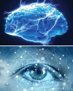 Połączenie oko-mózg