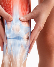Body Composition and Inflammation