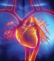 HDL i PON-1 - zmniejsz czynniki ryzyka chorób serca