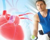 Carnosin - kardiovaskuläre Gesundheitsvorteile