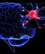 Magnésium-L-thréonate - Un nouveau composé de magnésium arrête la décomposition neurologique