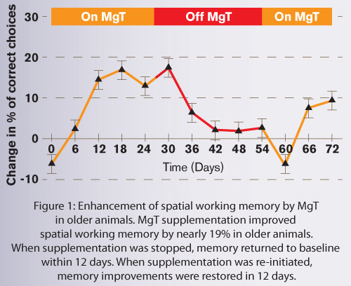 Magnésium-L-thréonate - Amélioration de la mémoire spatiale à long terme